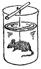 Мышь обрастает шерстью
