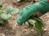 Поглотительная способность почвы