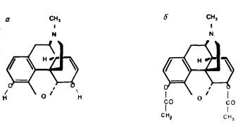 Различия между молекулами морфина (а) и героина (б)